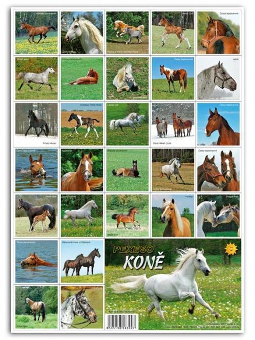 PEXESO Koně A4